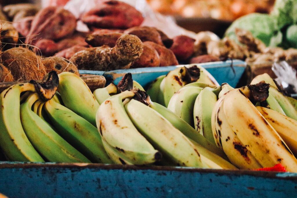 Investment in agriculture antigua barbuda