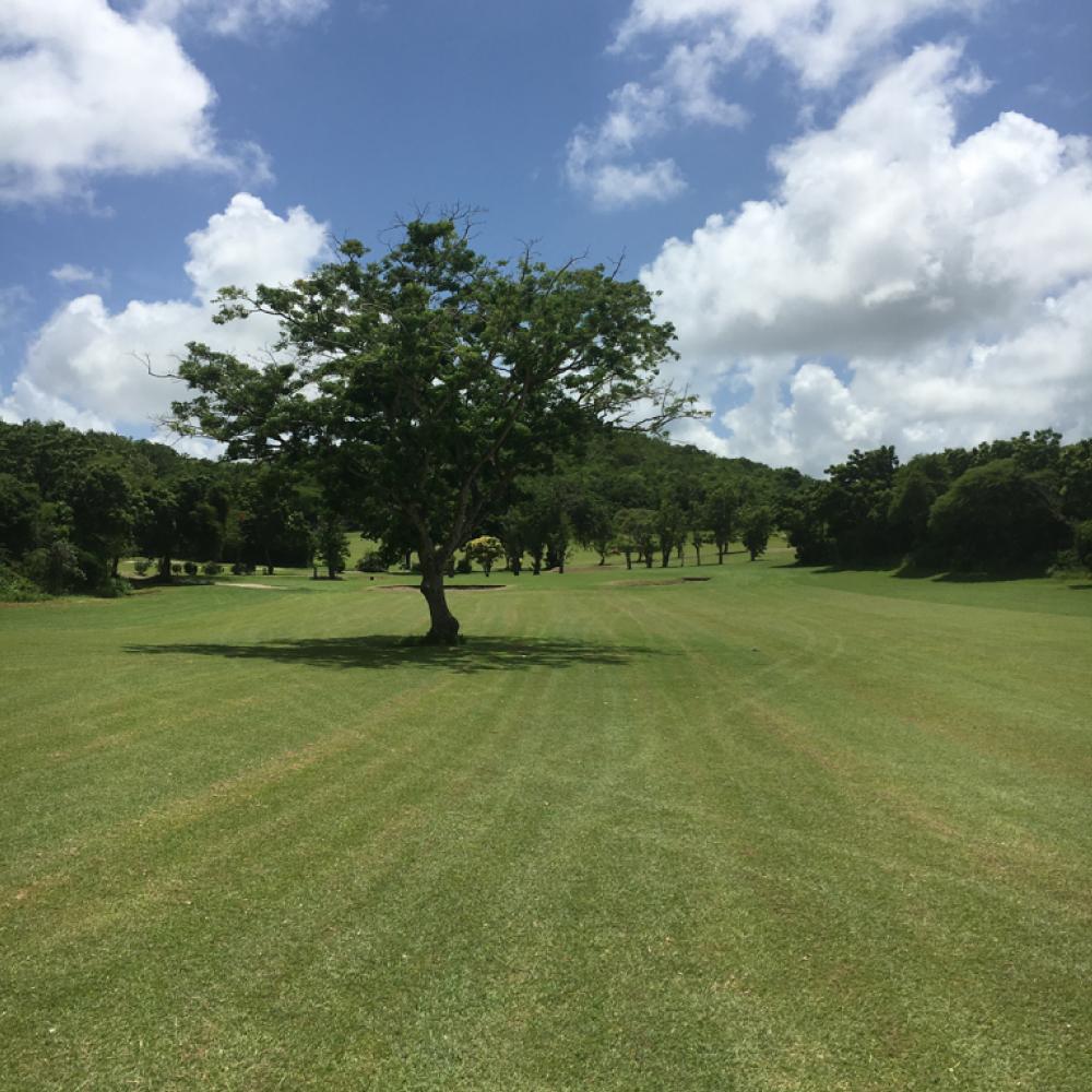 cedar valley golf course