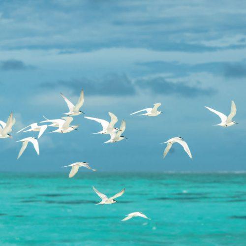 birds-valley-church-beach